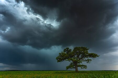 Dark thunderstorm clouds over the oak tree