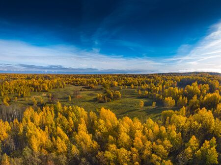 Aerial Drone view of colorful yellow forests in Lithuania, top view