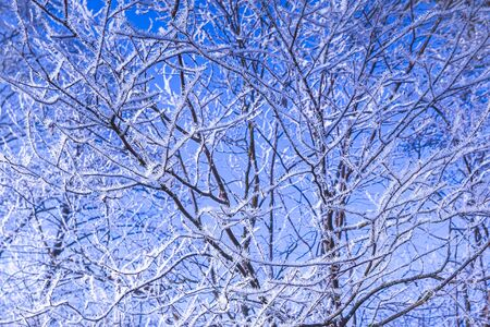 Frosty branches of a tree, weather forecast background