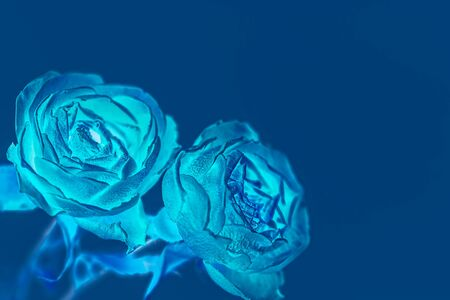 Blue roses inversed color background with copy space