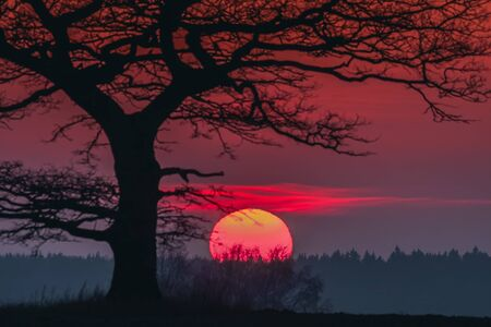 Oak tree silhuette with red sunset in the horizon, Lithuania Фото со стока - 139880500