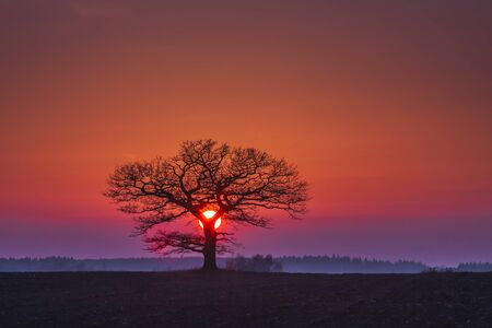 Oak tree silhuette with red sunset in the horizon, Lithuania