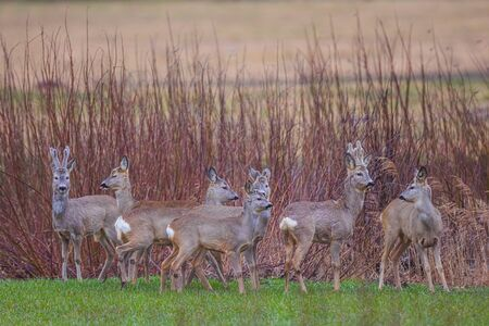 Group of deers on a mound in the spring background