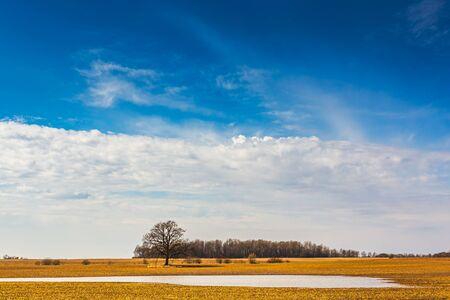Spring fields, sunny weather landscape with pond 版權商用圖片