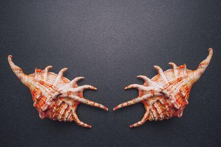 Sea shells symmetry on a dark background, flat lay