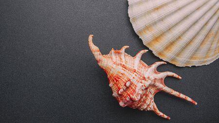 Sea shell on a dark background, flat lay