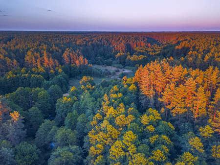 Summer warm sun light forest aerial view Banco de Imagens - 151946178