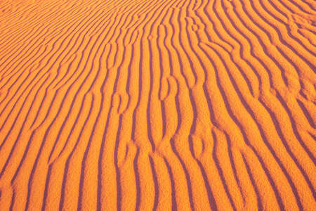 Desert and ripples in warm evening sunlight