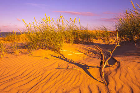 Desert and sand ripples in warm evening sunlight Banco de Imagens