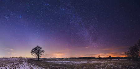 Landscape of zodiacal light with stars and a tree Imagens