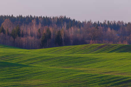 Spring landscape with green waves hills, spring green fields, Lithuania Banco de Imagens