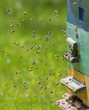 Swarm of bees in flight on a nice sunny day Banco de Imagens