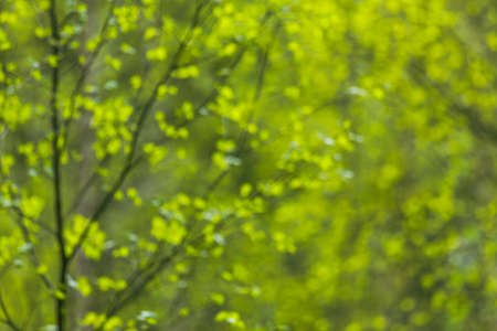 Natural green background with fresh leaves at spring