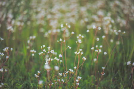 Field of flowers with blurred smooth background Banco de Imagens