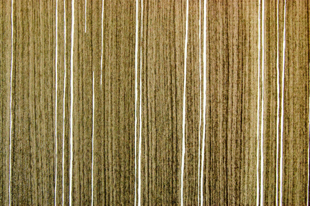 plywood: plywood texture