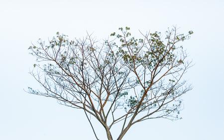 clound: tree on sky