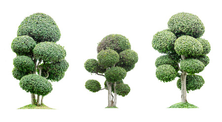 Group of trees isolated on white background