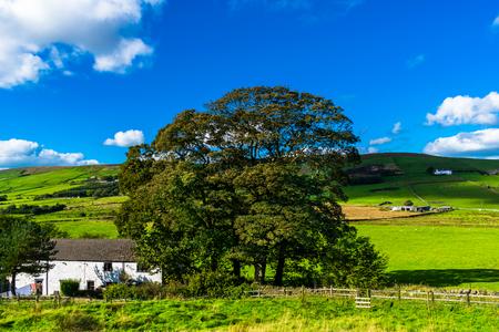 Tree on The Farm on sunny day, Forest Of Bowland, Lancashire, England, UK