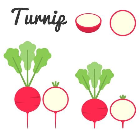 turnip: Vector turnip,flat design
