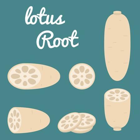 Vector Lotus root,flat design