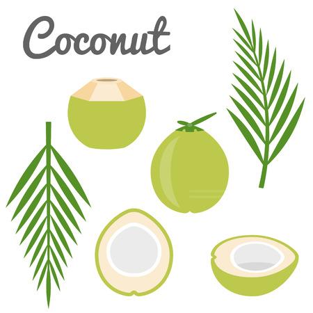 coconut leaves: Vector coconut icon