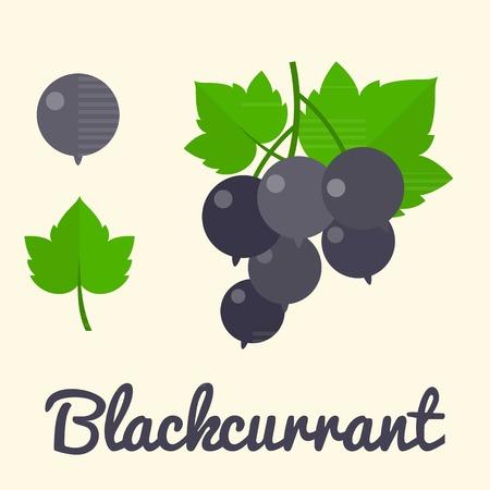 blackcurrant: Vector Blackcurrant, flat design Illustration
