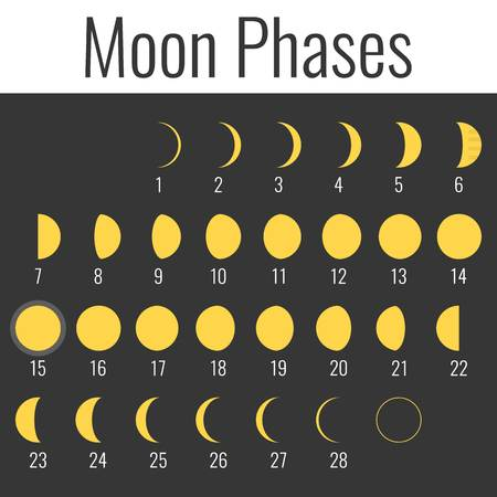moon phases: Vector moon phases, flat design