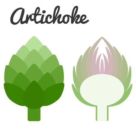 artichoke: Vector artichoke