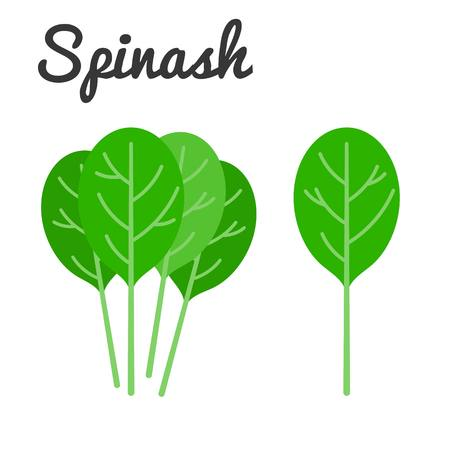 spinach: Vector Spinach with text, flat design no background Illustration