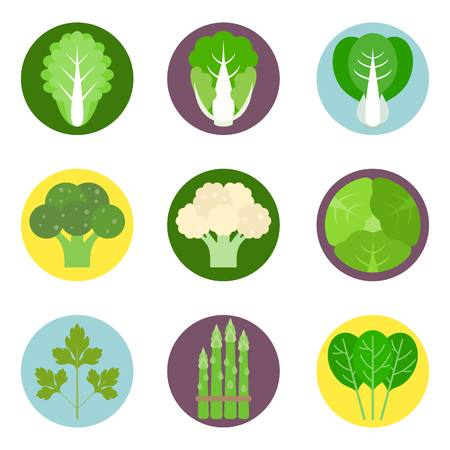 bok choy: Vector Vegetables flat icons set 1 Illustration