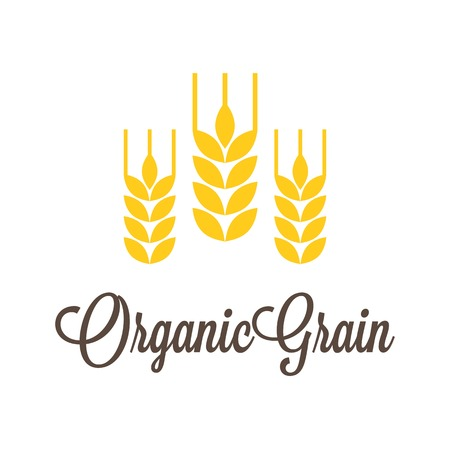 rye: Vector wheat icon with organic grain calligraphic alphabet Illustration