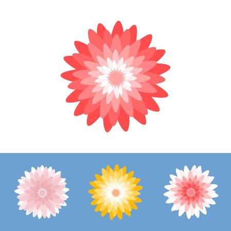 gerber daisy: Vector flower, Chrysanthemum, gerber daisy, flat design Illustration