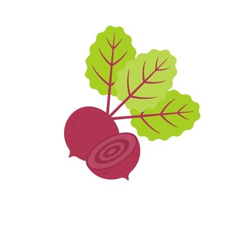 Isolated Red beetroot whole, cut, sliced, flat design Illustration