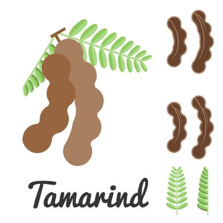 tamarindo: Tamarindo vector, diseño plano