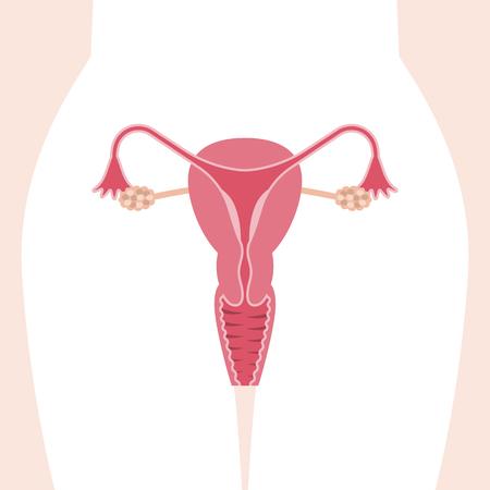 A Vector female reproductive system, flat design Vettoriali