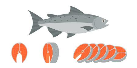 salmon fillet: Salmon fish and sliced of salmon fillet steak illustration, flat design vector