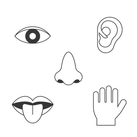 Five senses icon, outline design with name, sight, hear, smell, taste, touch