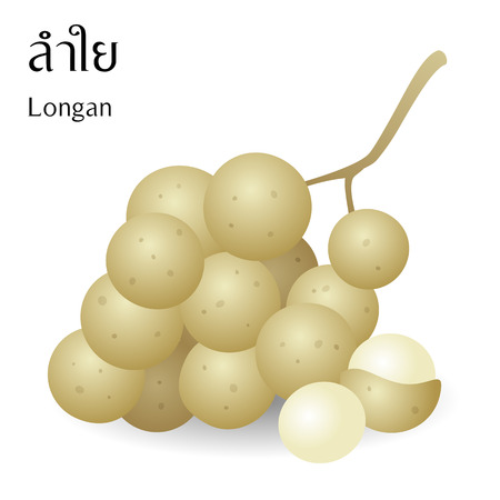 Thai fruits vector on white background with Thai alphabet meaning longan. Illustration