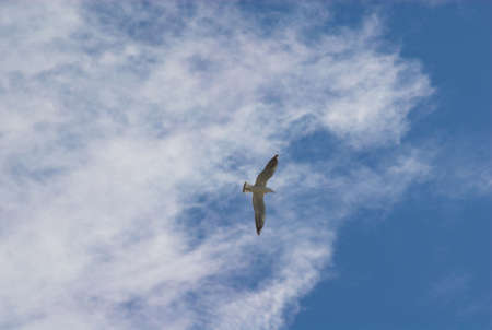 clouds; sky; birds; blue; white; nature; weather, background; photo