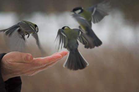fatten: bird, eat, fatten, food, hand, palm, park, sunday, tit, titis, wing, winter, three, fly, cold, man, hand,