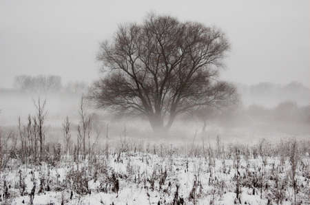 lonelyness: winter, white, snow, snowdrift, holiday, christmas, xmas, cold, frost, ice, oak, fog, field, grass, tree, freeze, chill, serenity, lonely, lonelyness, one, desolate, contrast, wallpaper, background, black, solitary, rime, hoar-frost, sleep, wait, beautifu Stock Photo