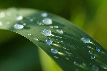 aquatic herb: dew, herb, weed, herbage, blade, morning, closeup, drip, drips, drop, droplet, droplets, drops, grass, green, nature, outdoor, plant, plants, reflect, reflection, shower, water, wet, aqua, aquatic, blades, close, condense, condensed, detail, details, gree