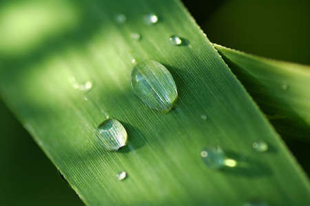 dew, herb, weed, herbage, blade, morning, closeup, drip, drips, drop, droplet, droplets, drops, grass, green, nature, outdoor, plant, plants, reflect, reflection, shower, water, wet, aqua, aquatic, blades, close, condense, condensed, detail, details, gree