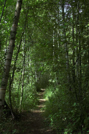 highroad: green,  way,  wood,  forest,  road,  highroad,  path,  track,  route,  pathway,  tract,  duct,  distance,  1 course,  means,  avenue,  tree 14 highway,
