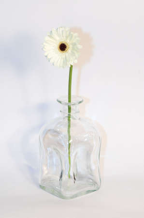 odour: Daisy, flower, white, pure, wet, drop, drops, water, rain, meadow, closeup, zoom, virgin, fresh, yellow, round, dew, garden, greetings, ocassional, birthday, smell, odor, odour, fragrance, field, parfum, nice, morning, delicate, vase, glass,