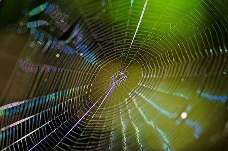 cobweb spider-web background on green autumn texture