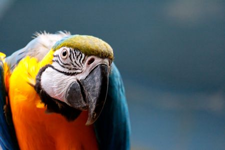 colorful tropical bird parrot in Warsaw Zoo  Banco de Imagens