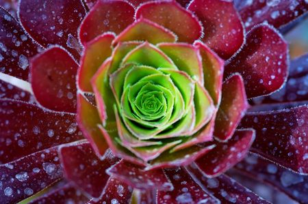 Macro of green and red succulent plant in the desert