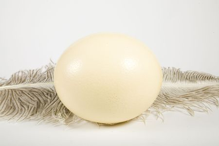 Huge ostrich's egg and feather on white background Banco de Imagens