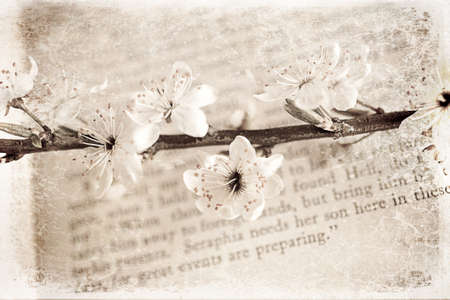 spring twig with white apple blossoms on the book